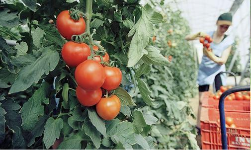 Manipulador alimentos Agrícola/Hortofrutícola